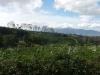 plantation_de_cafe_sur_les_pentes_du_volcan_poas