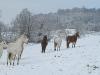 chevaux_neige